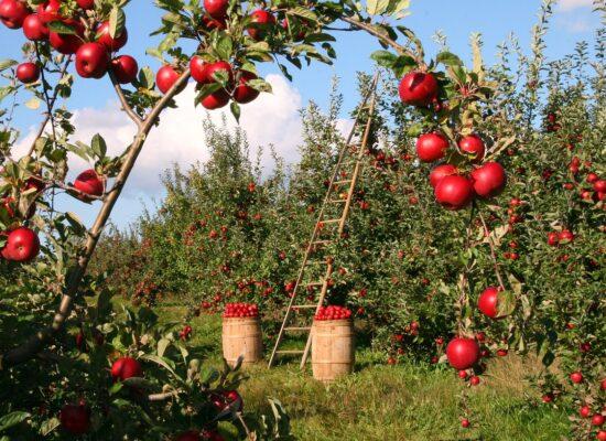 Sind importierte Lebensmittel besser fürs Klima als regionale?